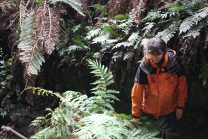 Bushwalking / Hiking / Tramping tour